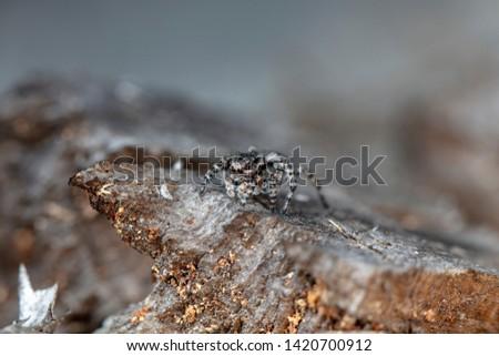 spider jumper in a native habitat #1420700912