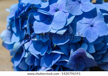 Beautiful Blue hydrangea flowers on rustic wood #1420796591