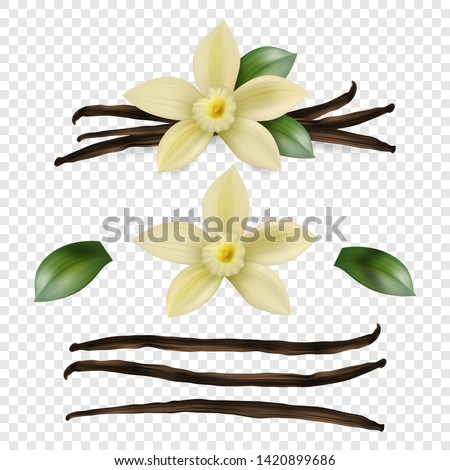 Vector 3d Realistic Sweet Scented Fresh Vanilla Flower with Dried Seed Pods and Leaves Set Closeup Isolated on Transparent Background. Distinctive Flavoring, Culinary Concept. Front View #1420899686
