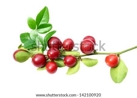 Super fruit, Scientific name Carissa carandas Linn. #142100920