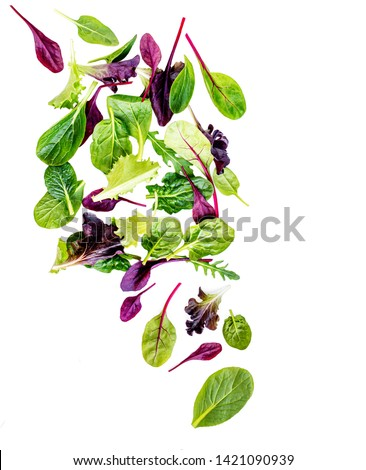 Flying Salad Leaves isolated on white background. Fresh mixed salad with arugula, lettuce, spinach and beets leaf.  #1421090939
