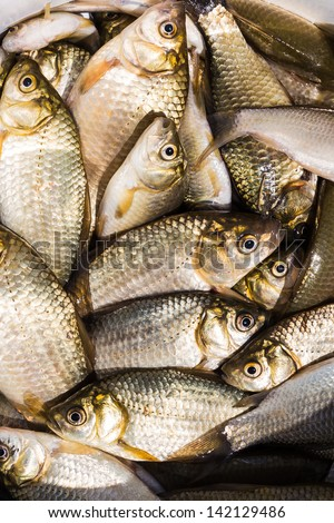 background of small fish caught in the river crucian carp #142129486