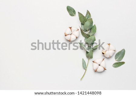 Flat lay flowers composition. Cotton flowers and fresh eucalyptus twigs on light gray background. Top view, copy space. Delicate white cotton flowers. Floral background, greeting card #1421448098