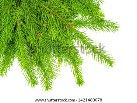 Spruce branch isolated on white background. Green fir. Christmas tree #1421480078