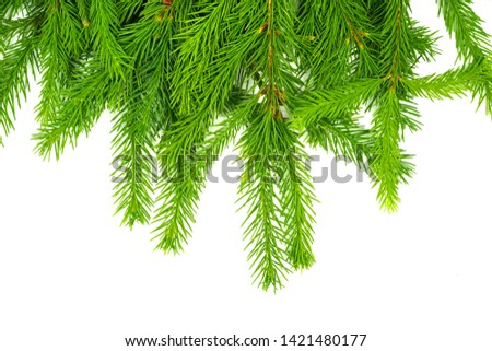 Spruce branch isolated on white background. Green fir. Christmas tree #1421480177