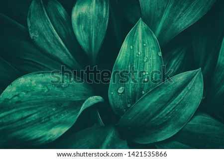 rainy season, water drop on lush green foliage in rain forest, nature background, dark toned process #1421535866