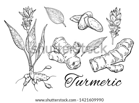 Ink Turmeric hand drawn set. Flower with root. Curcuma root, flower, leaves and sliced pieces. Vintage botanical art. Retro culinary sketch. Herbal vector illustration isolated on white background  #1421609990