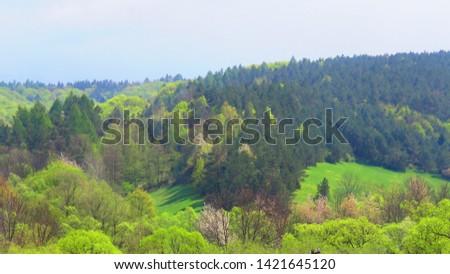 forest landscape in bieszczady mountains #1421645120