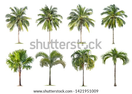 Coconut and palm trees Isolated tree on white background , The collection of trees.Large trees are growing in summer, making the trunk big. #1421951009
