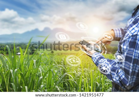 Innovation technology for smart farm system, Agriculture management, Hand holding smartphone with smart technology concept. asian male farmer working in Sugarcane farm To collect data to study. #1421951477