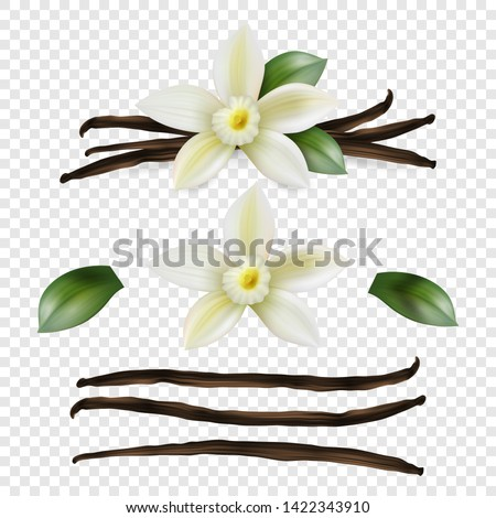 Vector 3d Realistic Sweet Scented Fresh Vanilla Flower with Dried Seed Pods and Leaves Set Closeup Isolated on Transparent Background. Distinctive Flavoring, Culinary Concept. Front View #1422343910