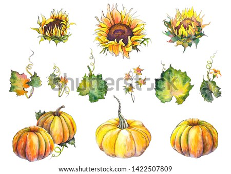 Set of sunflowers, pumpkins and pumpkin leaves. Watercolor illustration on white background. Isolated elements for design.