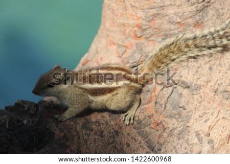 The Squirrel Spirit Animal. Fury animal #1422600968