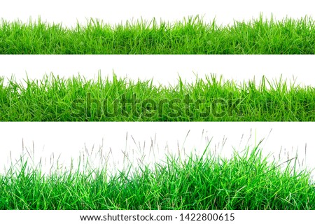Green Grass Border isolated on white background.The collection of grass.(Manila Grass)The grass is native to Thailand is very popular in the front yard. #1422800615