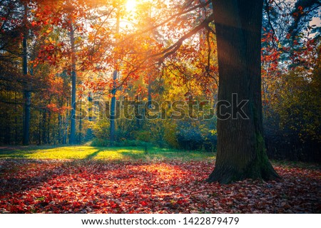 Sunny oak tree in the autumn forest #1422879479