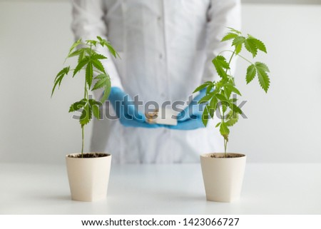 White table with Marijuana plant in pottery. Scientist with blue latex gloves holding box with CBD pills. Health care and medicine concept. #1423066727