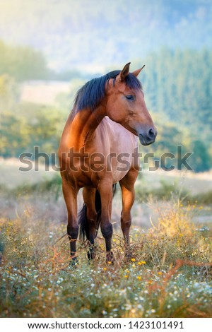 Chestnut horse standing in a meadow full of flowers at sunset #1423101491