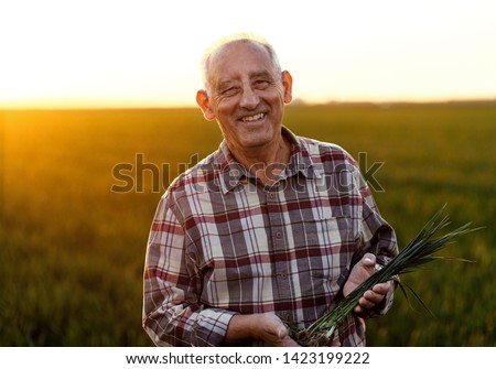 Portrait of senior farmer standing in young wheat field holding crop in his hands. Royalty-Free Stock Photo #1423199222