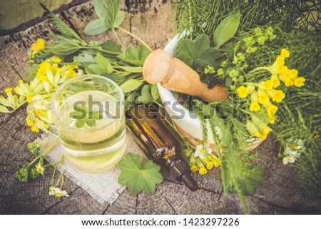 Top view of different wild herbal medicinal plants gathered on wooden table( Alchemilla vulgaris, common lady's mantle, Primula veris, Yarrow, common cowslip, Equisetum arvense, common horsetail. #1423297226