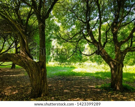 Summer forest trees shadows view. Spreading trees in summer forest. Hanging trees branches. Summer hanging tree branch #1423399289