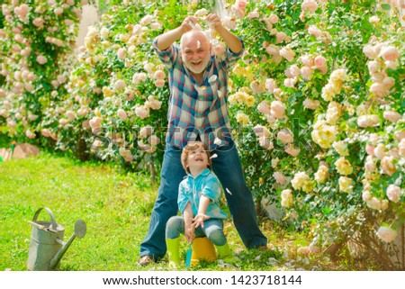 Gardening - Grandfather gardener in sunny garden planting roses. Gardener in the garden. Senior man with grandson gardening in garden. Gardening hobby #1423718144