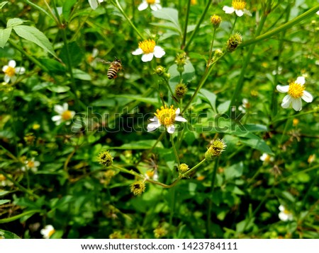 White flowers with grass background - Image #1423784111