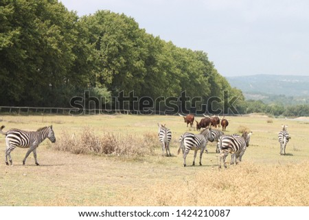 African animals roaming the meadow #1424210087
