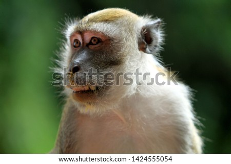monkey lives in a natural forest of malaysia. #1424555054