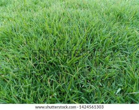 Fresh green grass, comfortable to the eye #1424561303
