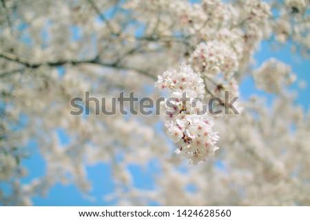 flower spring natural beauty color #1424628560