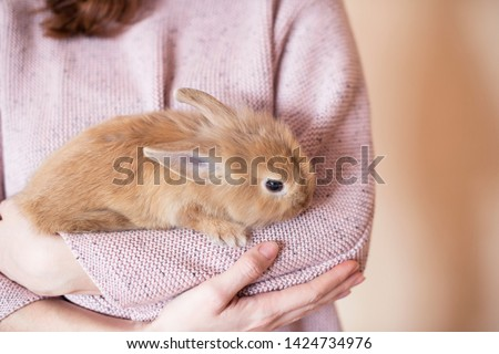 Girl holding a little red rabbit on a light background. A red  fluffy rabbit sits in the hands of a girl. Girl in pink sweater holding a rabbit. Proposition for pet shops and ads