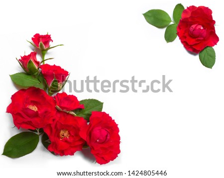 Red rose flowers frame with leaves on white background.