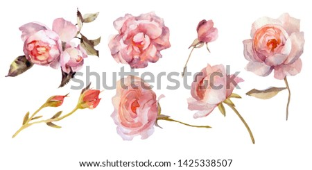 Set of hand-drawn watercolor roses. It can be used for your design.