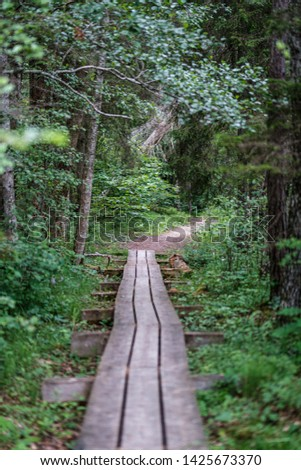 beautiful pathway in the green forest after the rain. summer fresh green foliage. destination nature #1425673370