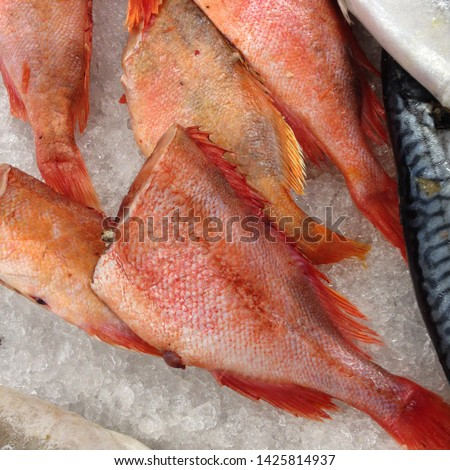 Macro photo food sea product fish red sea bass. Background fish red sea bass lies on the ice. Image of a fresh headless red sea bass product lying in the ice #1425814937