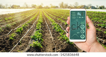 A hand is holding a smartphone with irrigation system management and analytics of data on the status of potato bushes. Young potatoes growing in the field. Agriculture landscape. Farming. #1425836648
