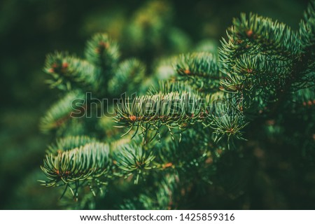Spruce branch. Beautiful branch of spruce with needles. Christmas tree in nature. Green spruce. Spruce close up. #1425859316