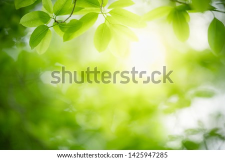 Closeup nature view of green leaf on blurred greenery background in garden with copy space for text using as summer background natural green plants landscape, ecology, fresh wallpaper concept. #1425947285