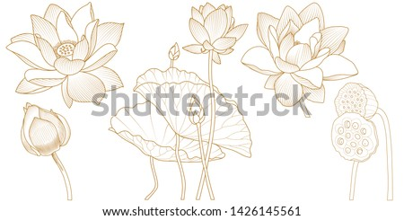 Vector set of hand drawn lotus flowers and leaves. Sketch floral botany collection in graphic golden style Bloomed, buds and leaves. Hand drawn contour illustrations collection. #1426145561
