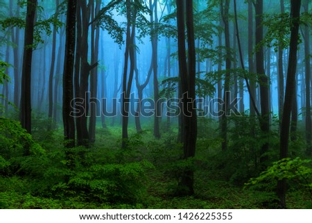 Fairy tale misty looking woods in a rainy day. Cold foggy morning in horror forest #1426225355