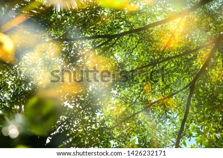 Abstract background of water surface with reflection of tree branch and leaves  #1426232171