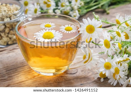 Daisy flowers in transparent glass tea cup, healthy chamomile herbs and glass jar of dry daisies buds. #1426491152