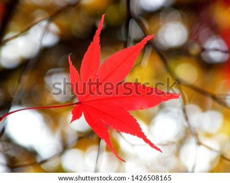 red leaf in the mid autumn in japn #1426508165