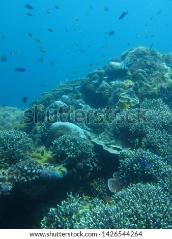 Under the sea in Philippines #1426544264