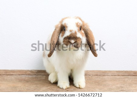 Lovely bunny easter rabbit on wooden background. beautiful lovely pets.
