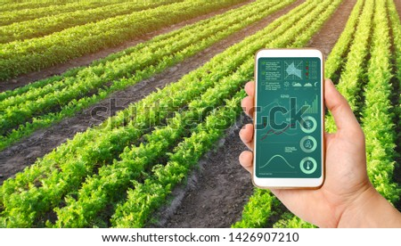 A hand is holding a smartphone with infographics on the background of a carrot plantation. Agriculture. innovative technologies, data analyzing on plants status. Vegetable rows. Organic. agriculture. #1426907210