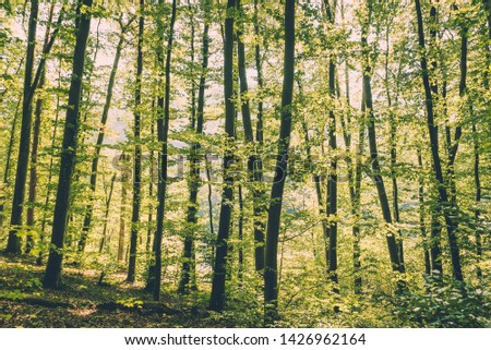 Swiss forest with tall trees and colourful green leaves along the river Rhine near the town of Eglisau in Switzerland. #1426962164