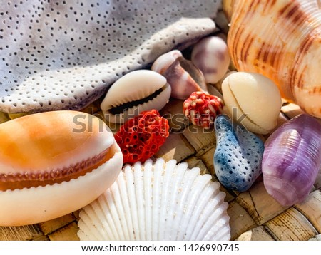 Close up macro shot of colorful sea shells found on a beach in Gili Trawangan, Lombok, Bali, Indonesia. Red coral, blue coral, purple shell, white shell, orange shell. #1426990745
