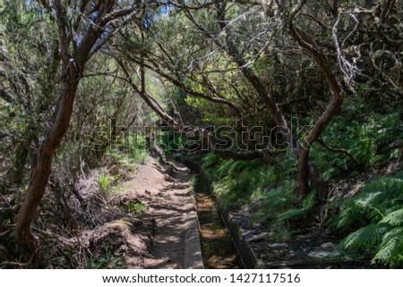Levada do Alecrim - Rosemary path, Madeira Island hike #1427117516