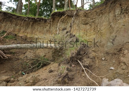 Slide Soil Erosion, Row of Trees Exposed to Seaside Cliff Face Erosion with Crumbling Earth and Dirt, Climate Change Sea Levels, Uprooted Trees Lying on Sand Cause by Coastal Erosion, Landslide #1427272739